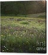 Wildflower Sunburst One Canvas Print