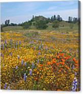 Wildflower Wonderland 8 Canvas Print