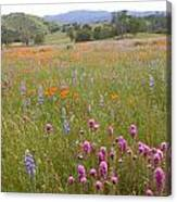 Wildflower Wonderland 6 Canvas Print