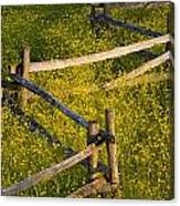 Wildflowers And A Wooden Fence At Canvas Print