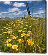 Wildflowers And Barbed Wire Canvas Print