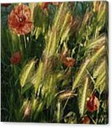Wildflowers And Grass Tufts In Provence Canvas Print