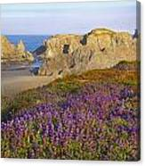 Wildflowers And Rock Formations Along Canvas Print