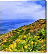 Wildflowers At Point Loma Canvas Print
