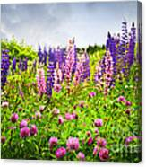 Wildflowers In Newfoundland Canvas Print