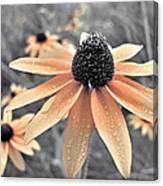 Wildflowers Of Ontario Canvas Print