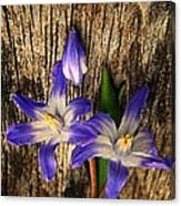 Wildflowers On Wood Canvas Print
