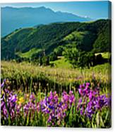 Wildflowers Umbria Canvas Print