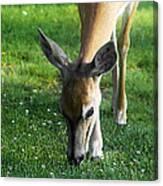 Wildlife Beauty Canvas Print