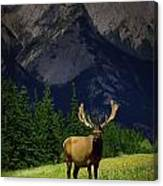 Wildlife In The Mountains Canvas Print