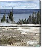 Wildlife In Yellowstone Canvas Print