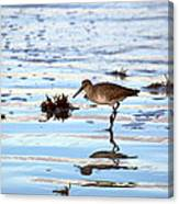 Willet Walks On Water Canvas Print