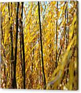 Willow Curtain Canvas Print