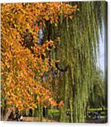 Willow In The Garden Canvas Print