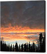Willow Sunrise Canvas Print