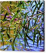 Willows At The Pond Canvas Print