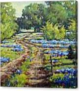 Wimberley's Bluebonnets Canvas Print