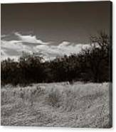Wind Blown Grass 2 Canvas Print