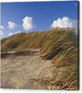 Wind Blown Grass Tussocks Precariously Canvas Print