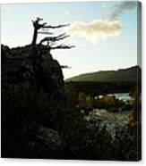 Wind Blown Tree At Many Glacier Canvas Print