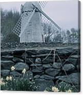 Windmill And Daffodils  Canvas Print