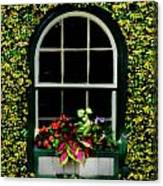 Window On An Ivy Covered Wall Canvas Print