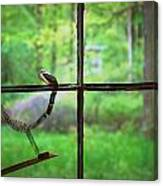 Window Pain Canvas Print