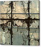 Window Vines Canvas Print