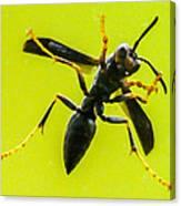 Window Wasp Canvas Print