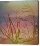 Windswept  Canvas Print
