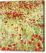 Windy Poppies Canvas Print