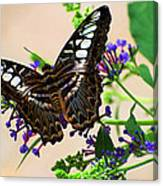 Wing Of Beauty Canvas Print