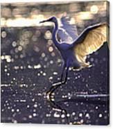 Wingdance Canvas Print