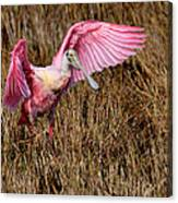 Wings Of Pink And Silk Canvas Print