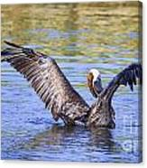 Wings Up Canvas Print