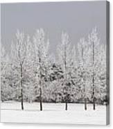 Winter, Calgary, Alberta, Canada Canvas Print