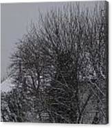 Winter Cold Branches Canvas Print