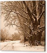 Winter Country Road Canvas Print