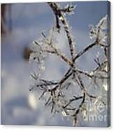 Winter Crystals Canvas Print
