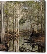 Winter Cypress   Canvas Print