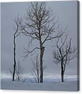 Winter Elegance Too Canvas Print