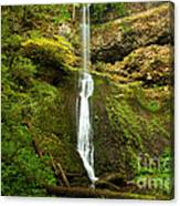 Winter Falls Canvas Print