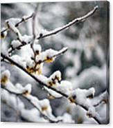 Winter Fleurs Canvas Print