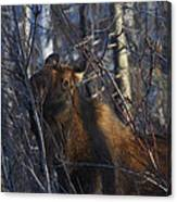 Winter Food Canvas Print
