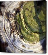 Winter Fungi Canvas Print