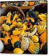 Winter Gourds  Canvas Print