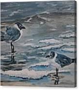 Winter Gulls Canvas Print
