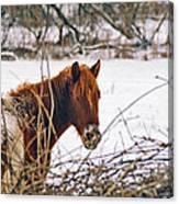 Winter Horse Landscape Canvas Print