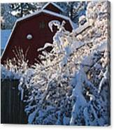 Winter Look Canvas Print