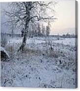 Winter Scene With Snow-covered Grasses Canvas Print